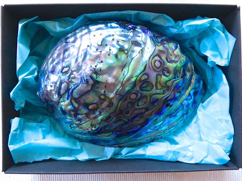 Paua-Muschel in Geschenksbox