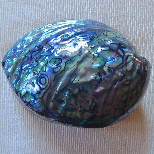 Wunderbare Paua-Muscheln