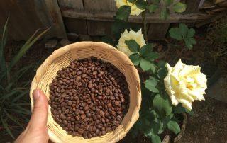 Kaffee Rose