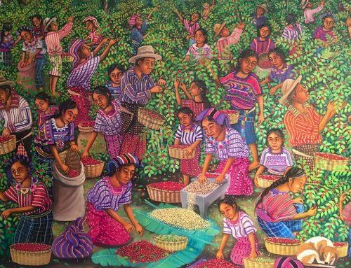 Gukumatz Café Pedrano – die Ernte 2020 bringt eine leichte Preissteigerung